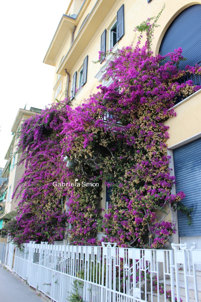 Vacanta Cu Flori Italia Cinque Terre