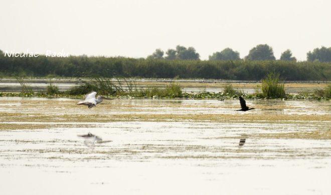 Poze din Delta Dunarii