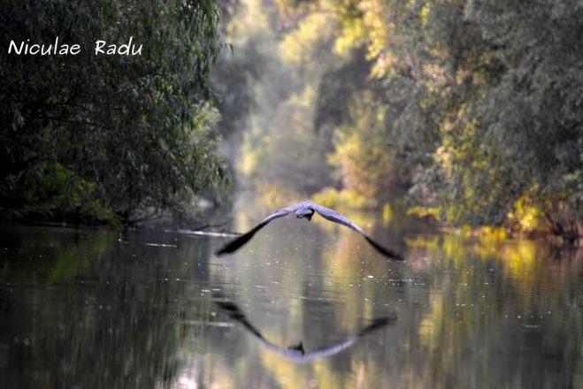 Imagini cu Pasari in Delta Dunarii