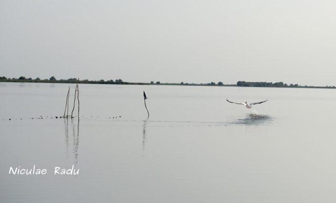 Fotografii Delta Dunarii