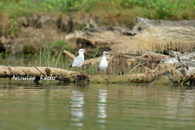 Delta Dunarii Fotografii Cu Pasari