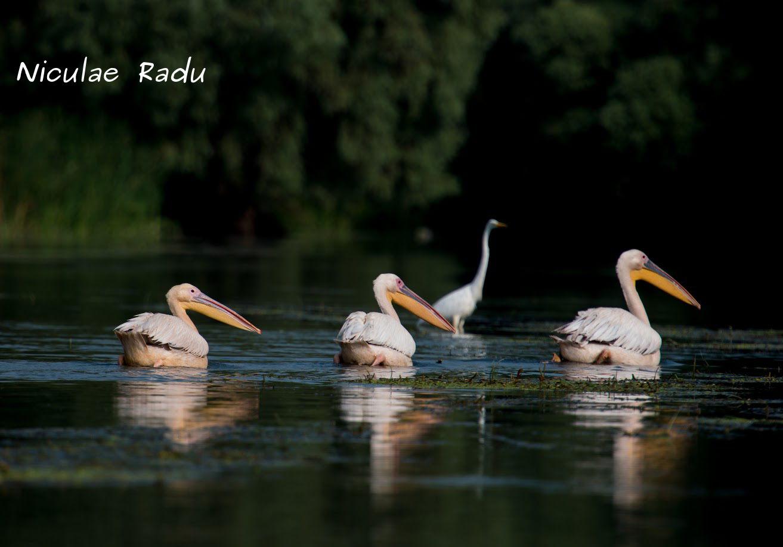 Birdwatching In Delta Dunarii
