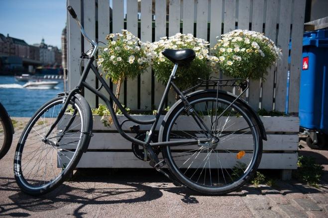 Flori in Copenhaga, Vacanta cu Bicicleta, Gabriela Simion