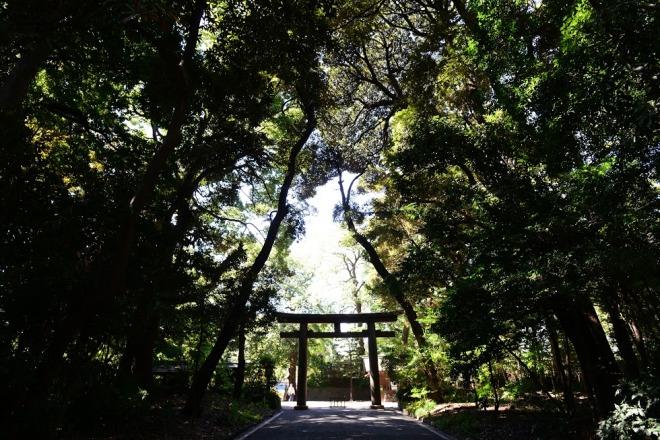 Hanami, Vacanta in Japonia, Gabriela Simion