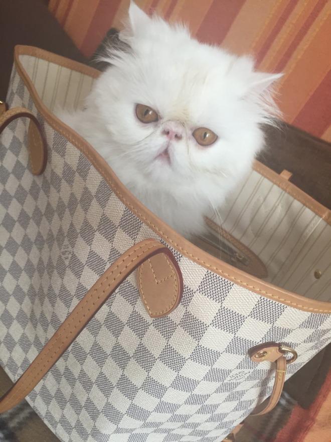 Gabriela Simion Pleaca in Vacanta cu Pisica